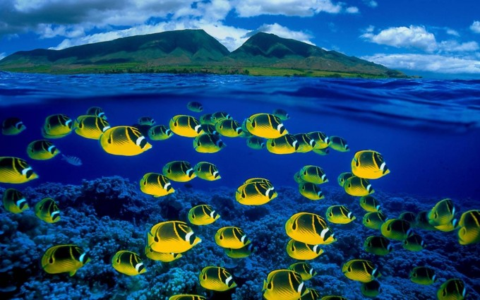 fish wallpaper ButterflyFish