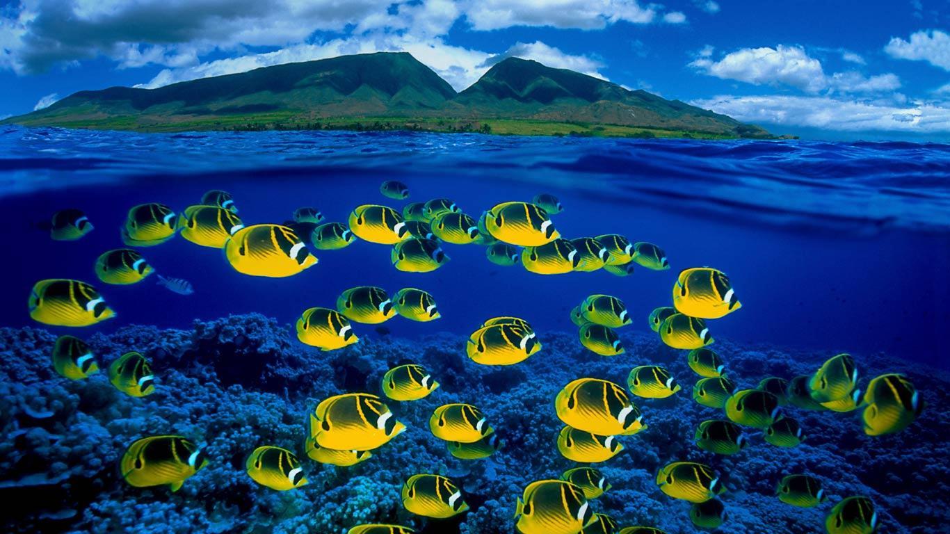 fish wallpaper ButterflyFish