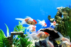 fish wallpaper aquarium nice