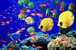 fish wallpaper blue