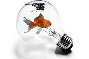 fish wallpaper bulb