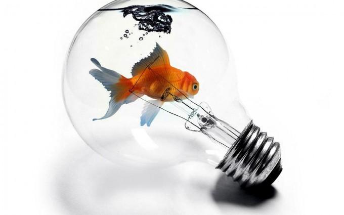 fish wallpaper bulb