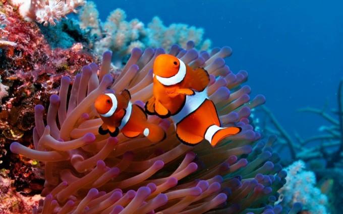 fish wallpaper clown