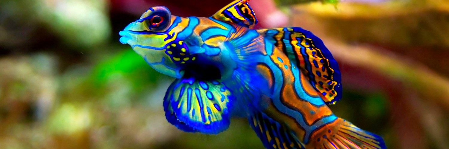 fish wallpaper colorful - HD Desktop Wallpapers | 4k HD