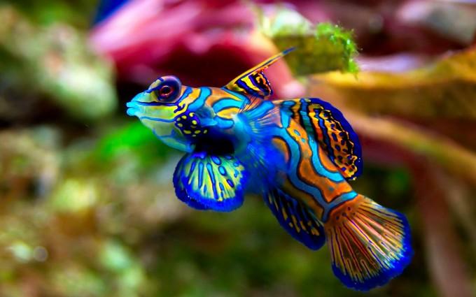 fish wallpaper colorful