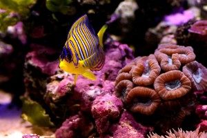 fish wallpaper cute