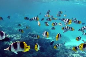 fish wallpaper desktop