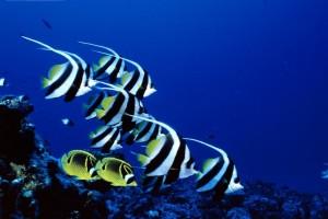 fish wallpaper downloads free