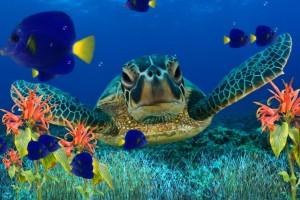 fish wallpaper free animated