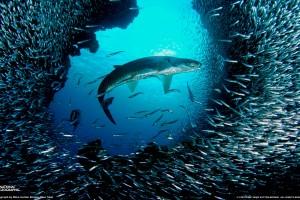 fish wallpaper full hd