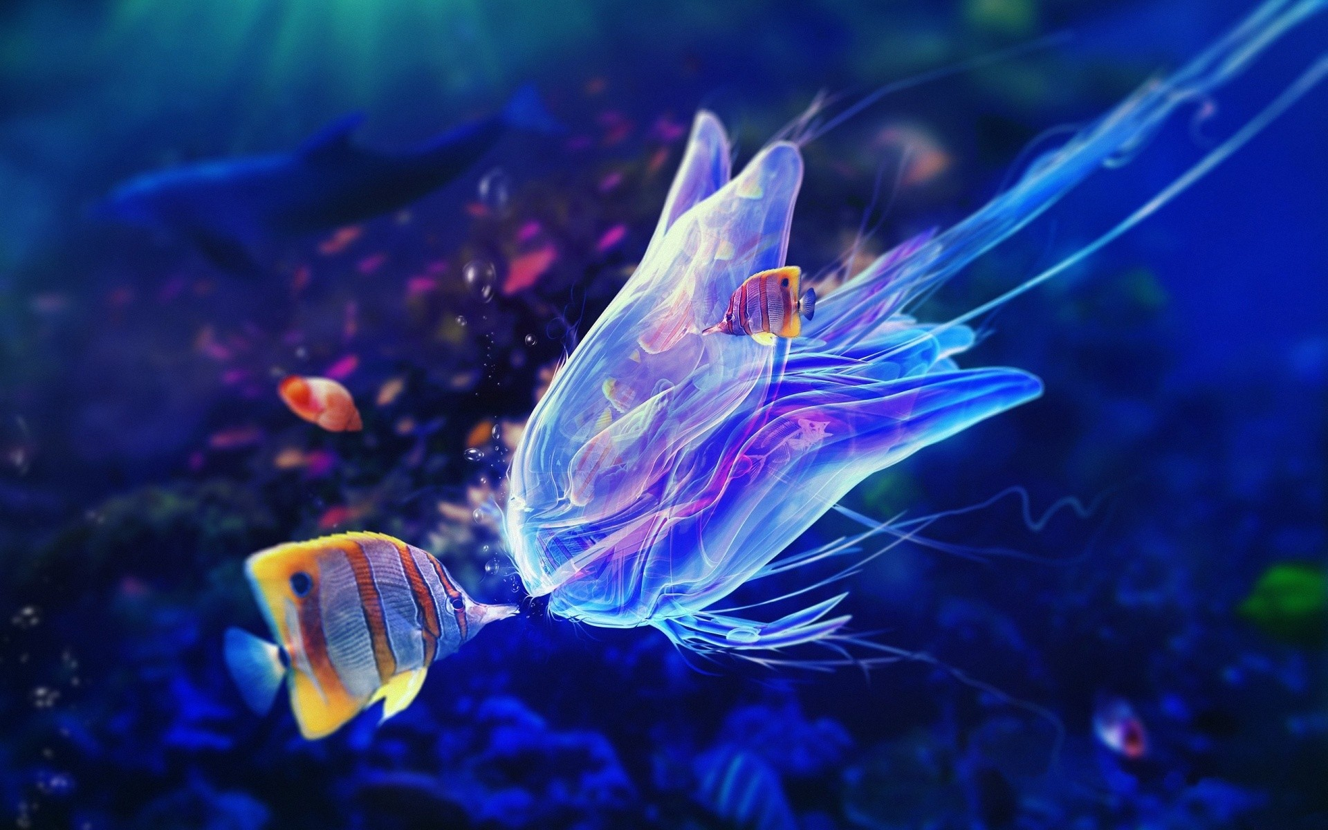 fish wallpaper jelly