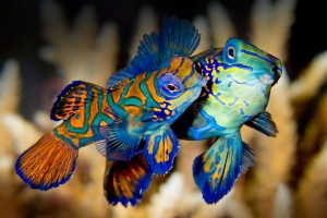 fish wallpaper laptop