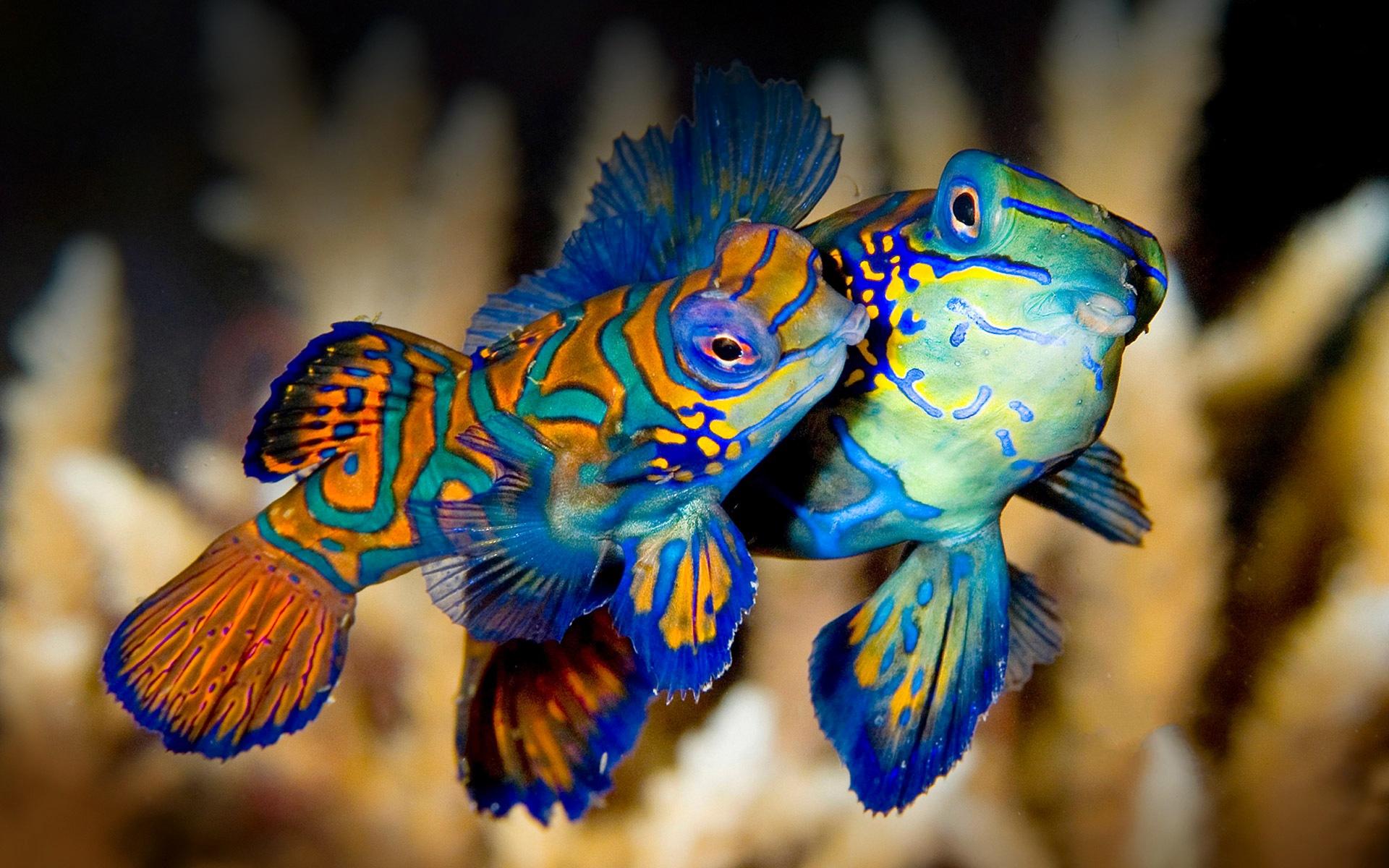 fish wallpaper laptop
