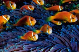 fish wallpaper ocean free