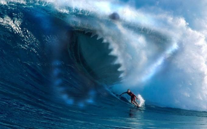 fish wallpaper shark download