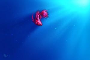 fish wallpaper siamese