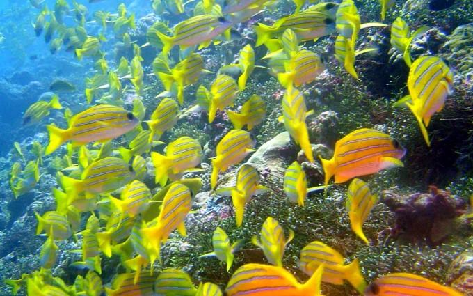 fish wallpaper sweet