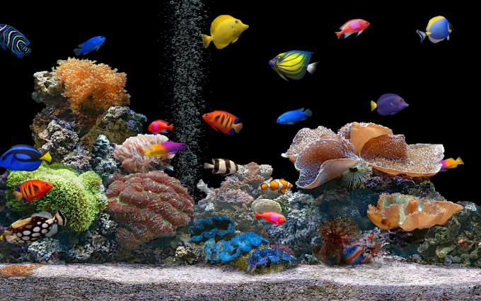 fish wallpaper tank
