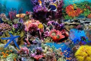 fish wallpaper undersea