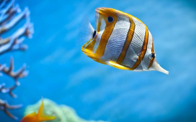 fish wallpaper yellow