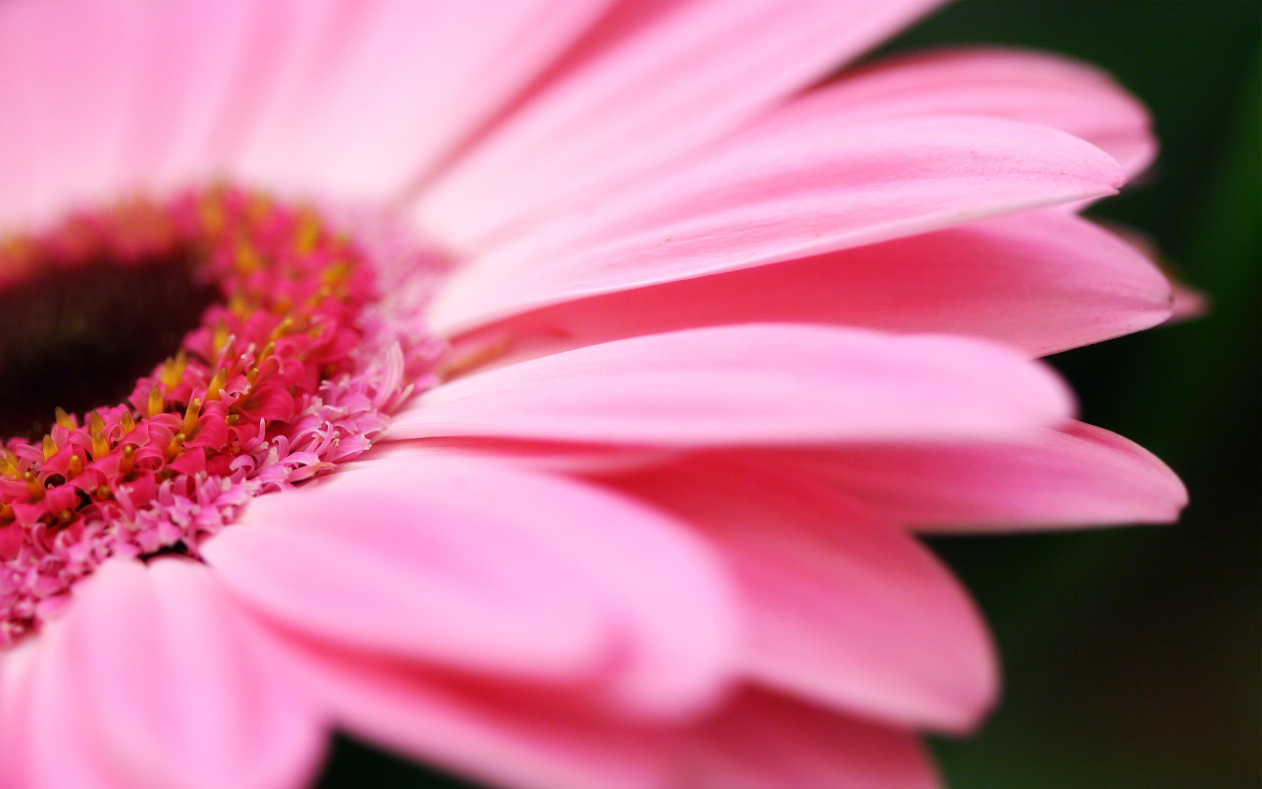 floral wallpaper pink