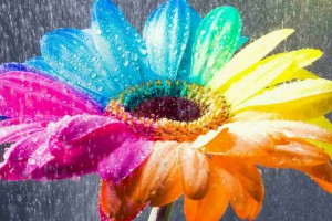 flower wallpapers colorful rain