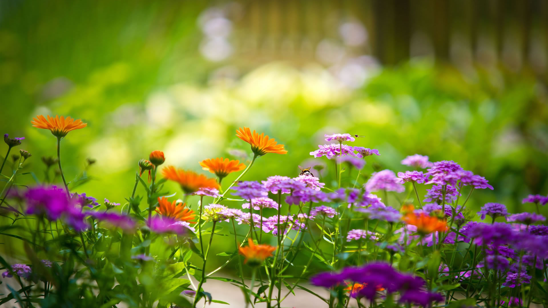 flower wallpapers colorful
