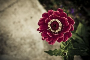 flower wallpapers pc