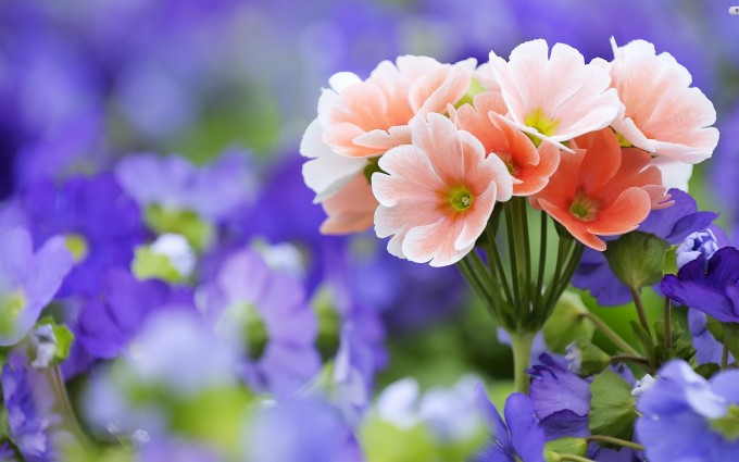 flower wallpapers pictures
