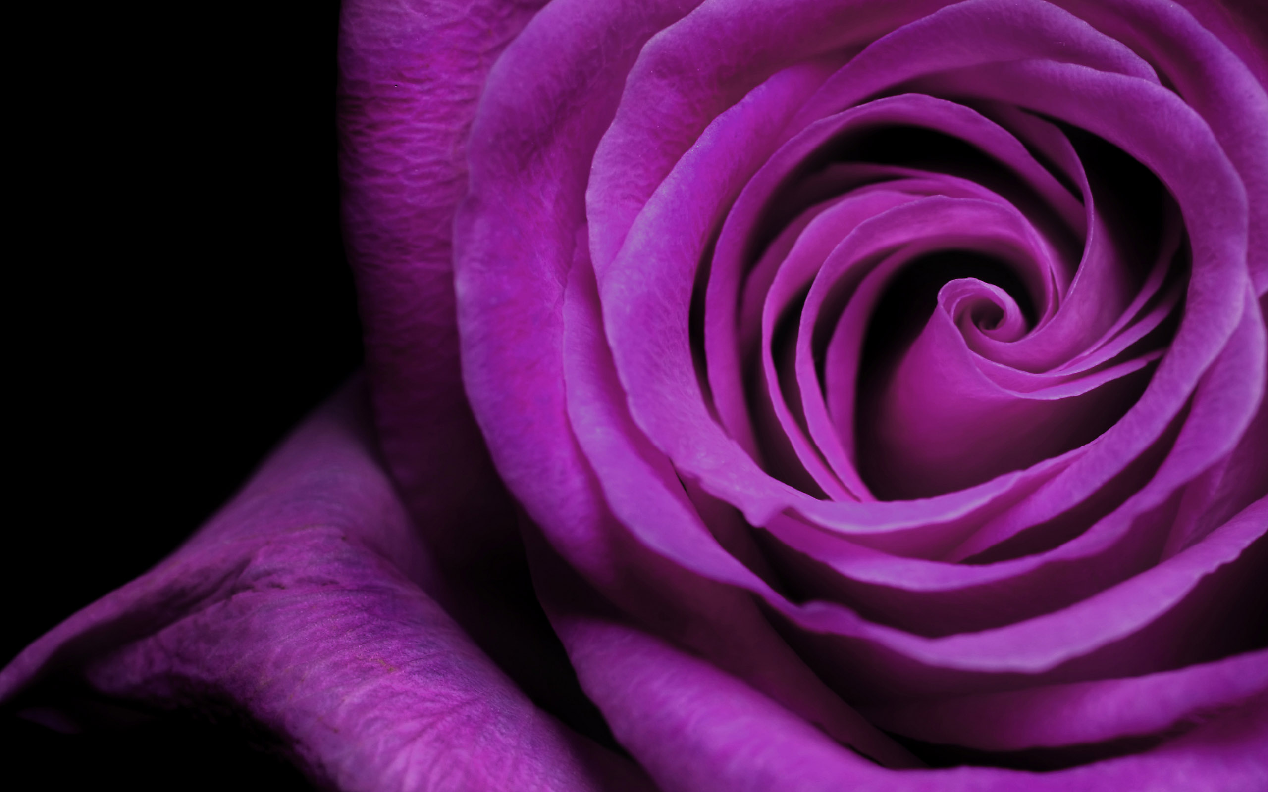 flower wallpapers purple desktop