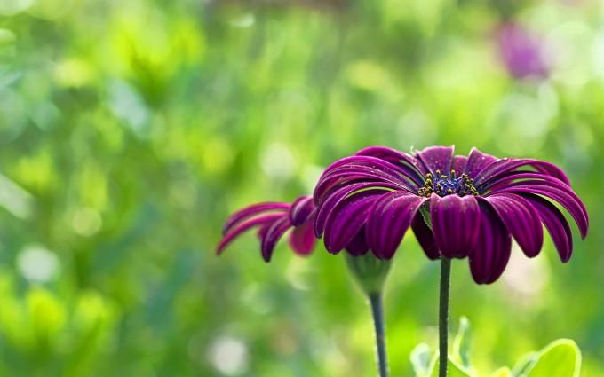 flower wallpapers purple summer