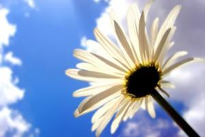 flower wallpapers sky white