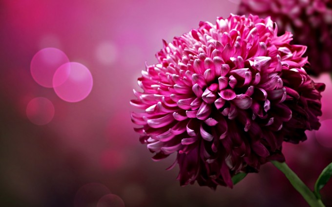 flower wallpapers widescreen