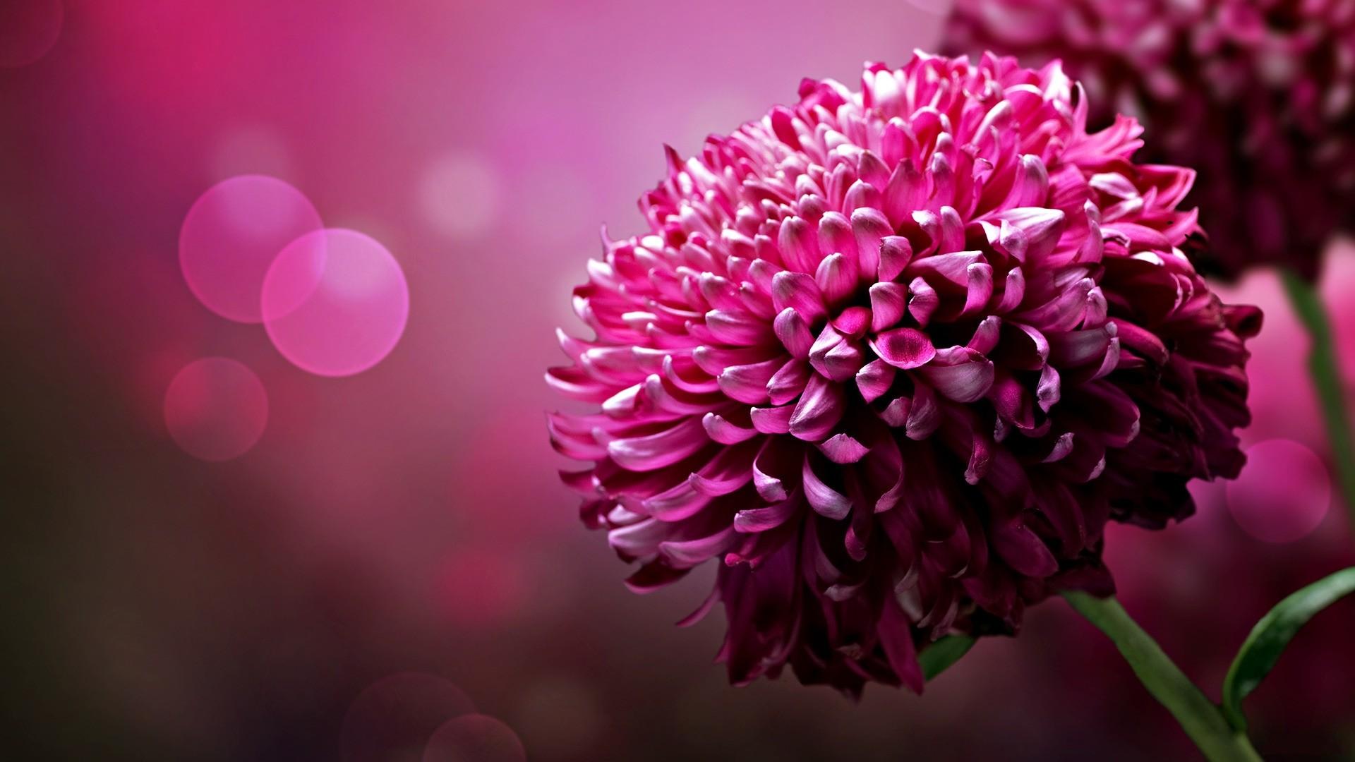 flower wallpapers widescreen