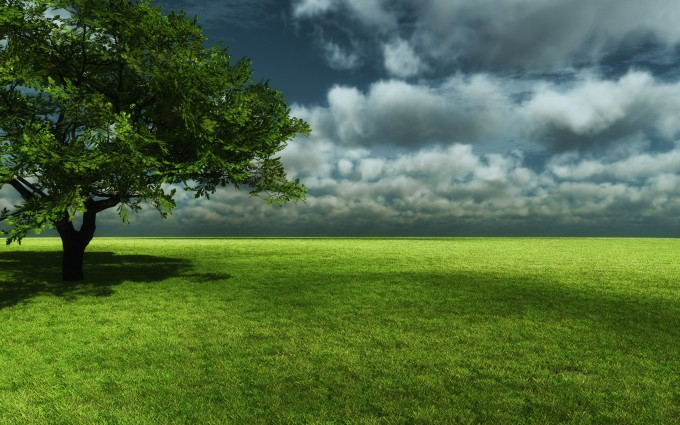 green trees wallpaper