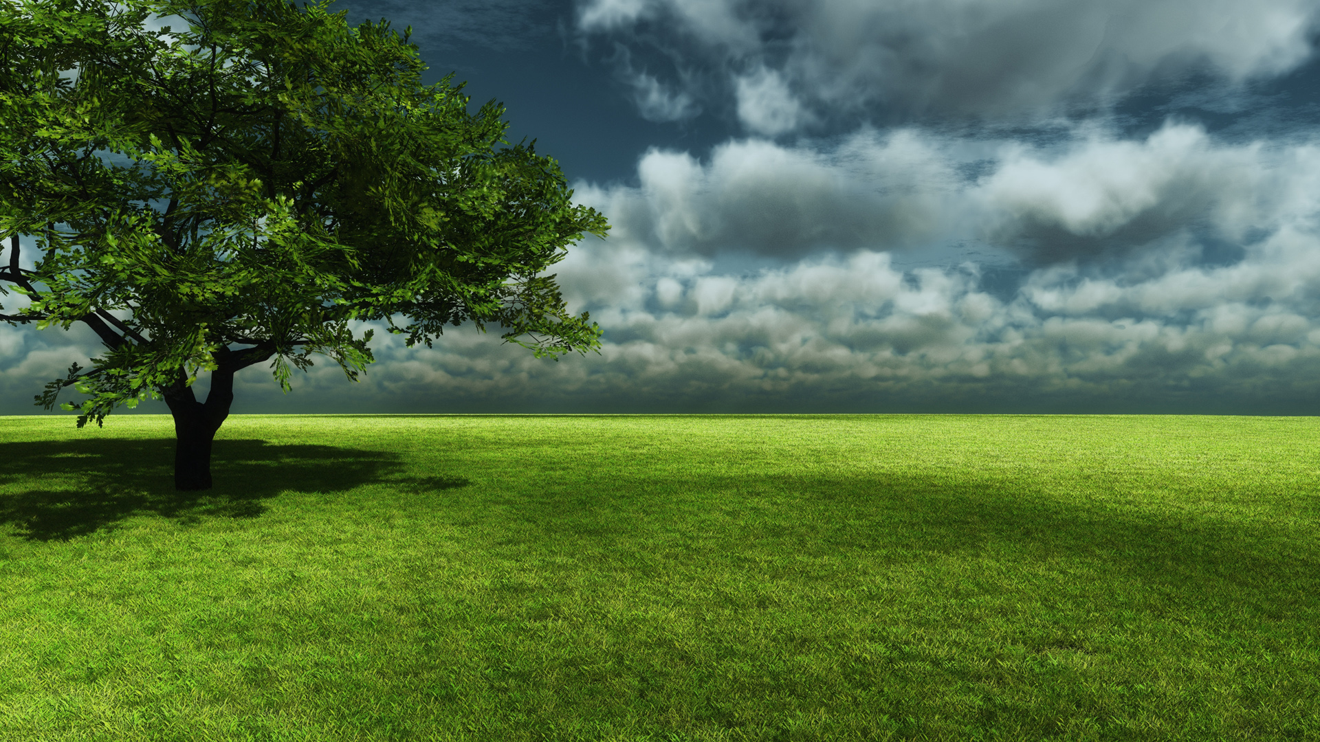green trees wallpaper
