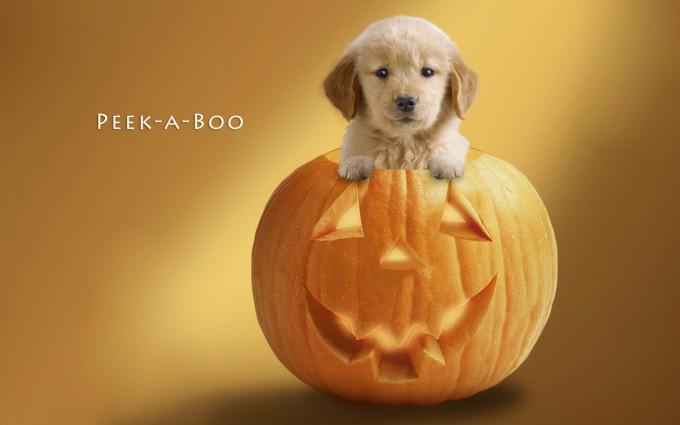 halloween wallpapers dog