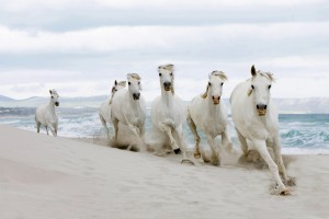 horse wallpapers beach 2