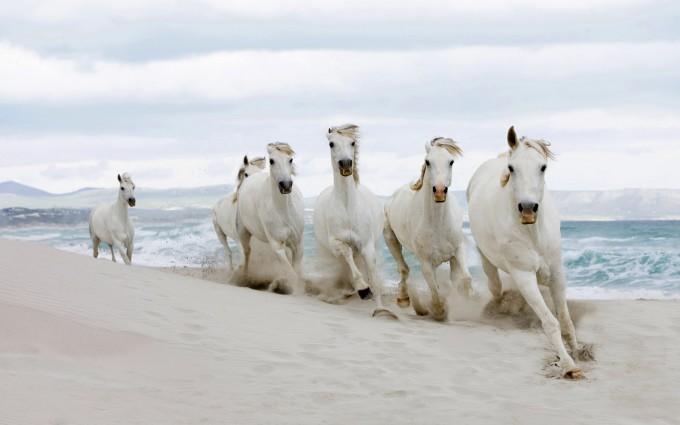 horse wallpapers beach 2