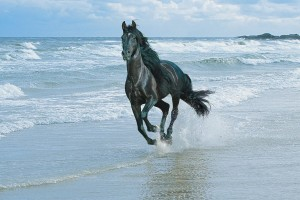 horse wallpapers black water