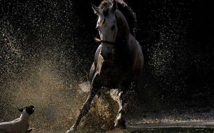 horse wallpapers cool