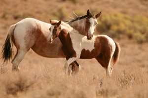 horse wallpapers cute