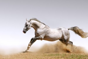horse wallpapers desktop
