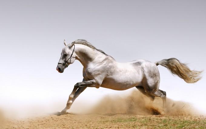 horse wallpapers desktop