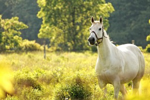 horse wallpapers green