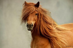 horse wallpapers gujrati