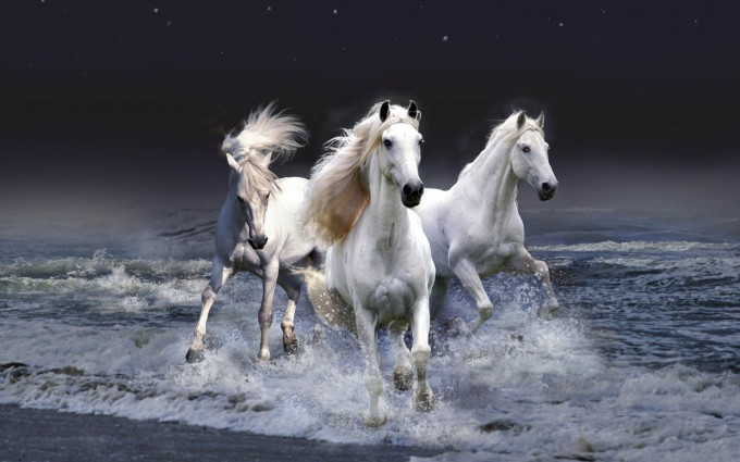 horse wallpapers latest