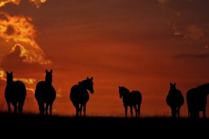 horse wallpapers magnificent