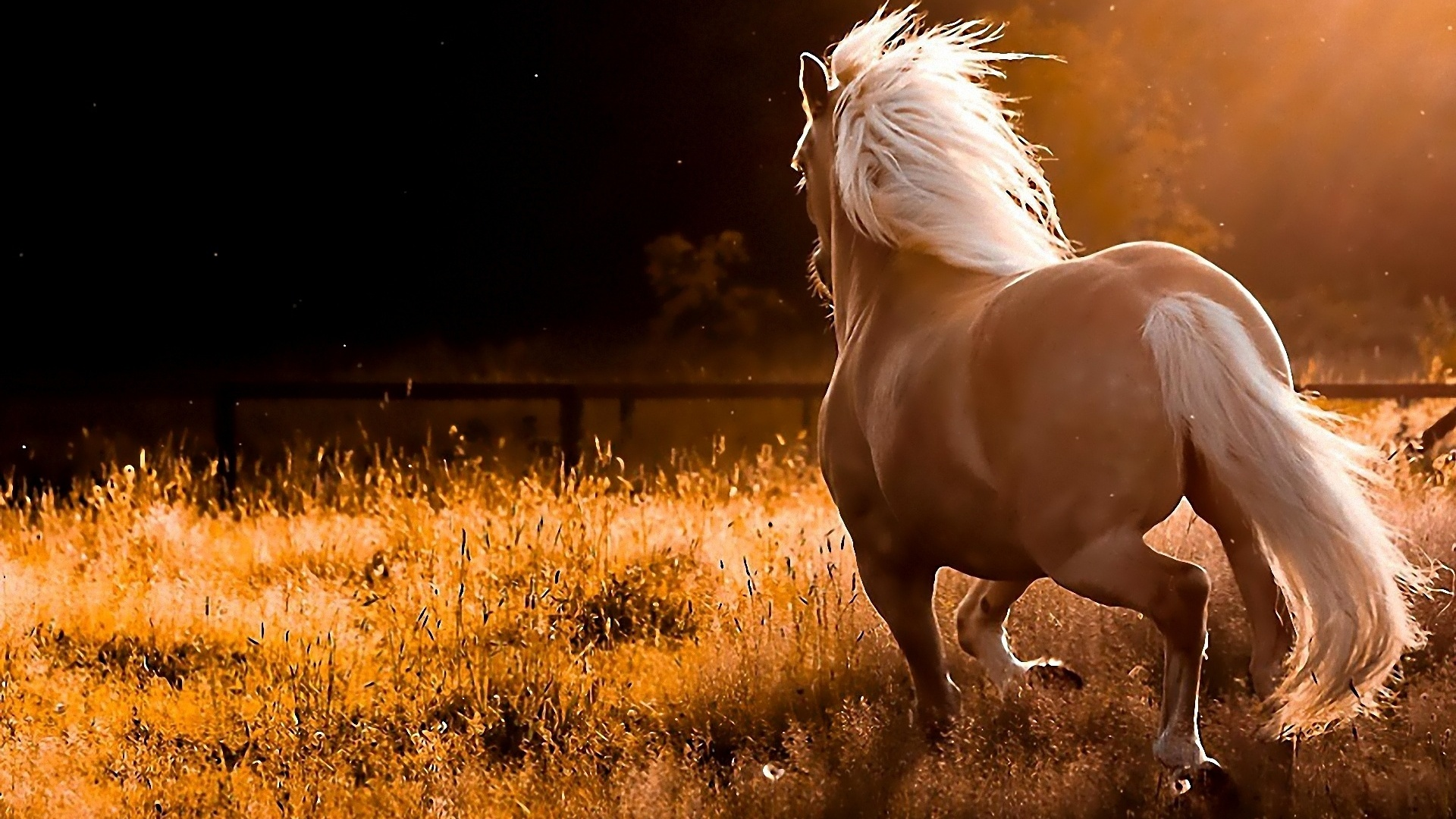 horse wallpapers nice