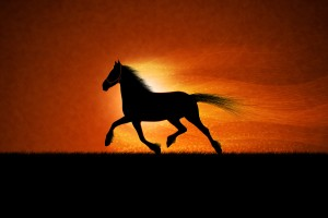 horse wallpapers running